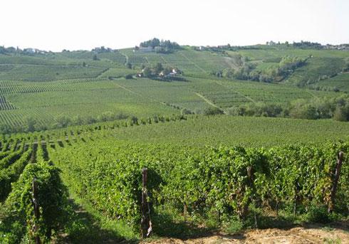 Vista dei vitigni abruzzesi