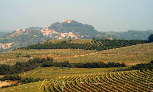 La coltivazione di vite in Basilicata