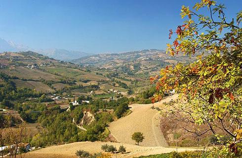 Vitigni in Calabria