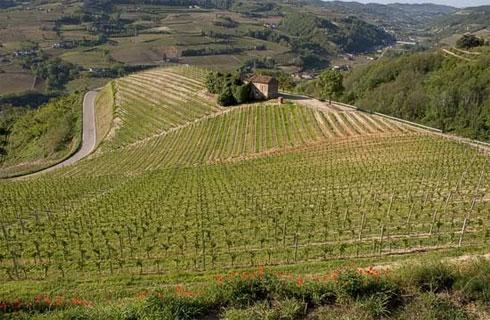 Vigneto in Piemonte