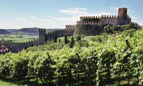 I vini e i vitigni del Veneto