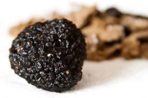 tartufo-nero-vino