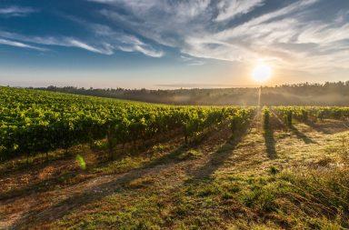 toscana chianti viaggi vino