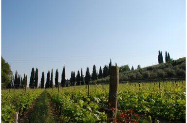 valpolicella vino tour